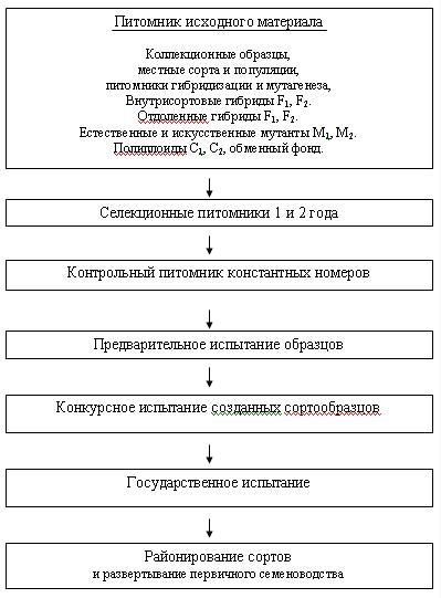 Схема селекционного процесса